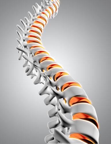 Relation entre mal de dos et colonne vertébrale